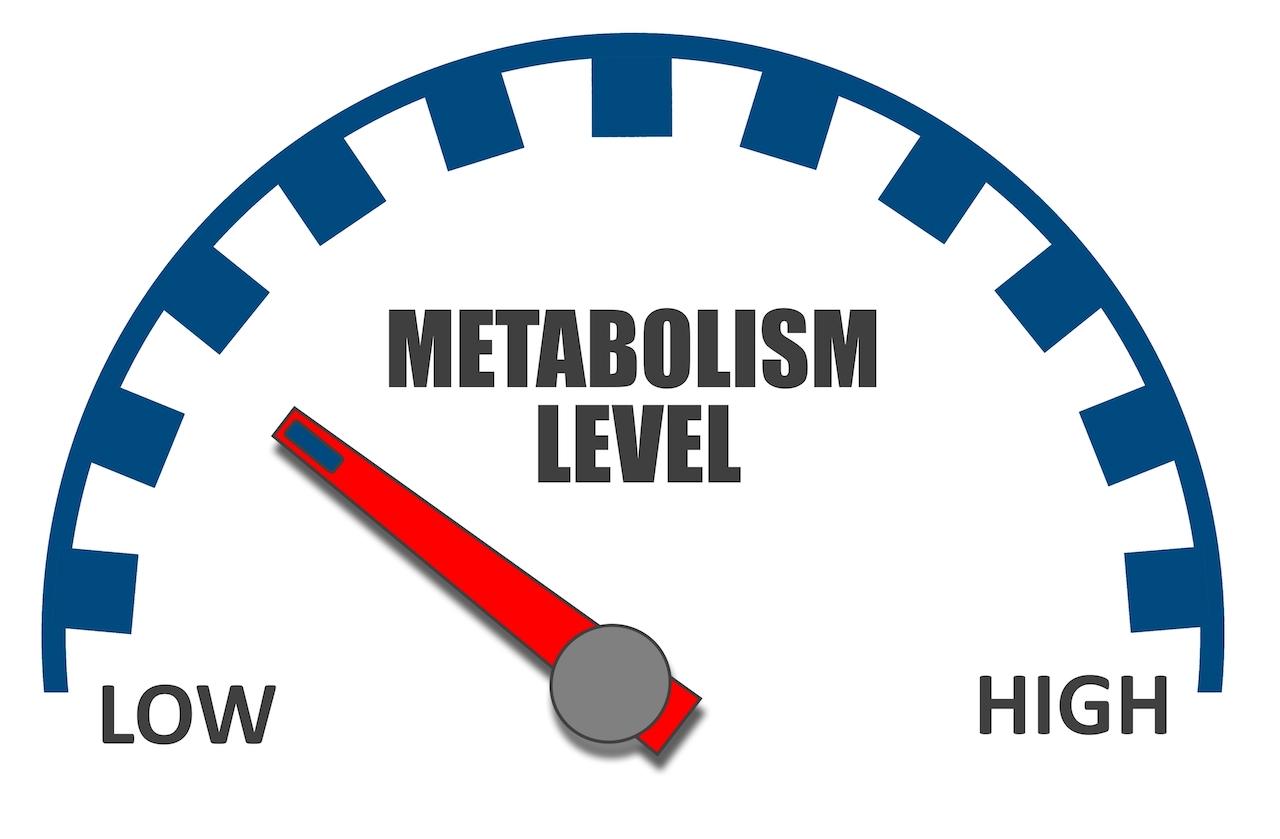 métabolisme bas