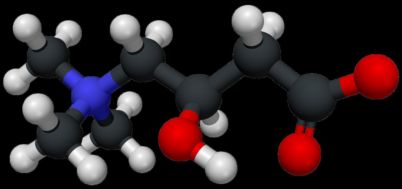 carnitine nutrition