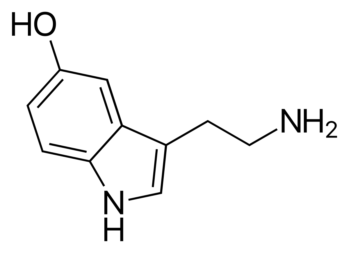 sérotonine mémoire